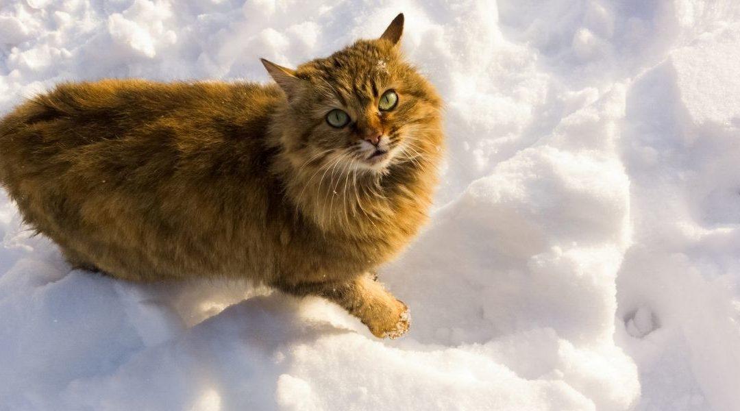 ABC, die Katze lief im Schnee – ein schönes Winterlied zum mitsingen
